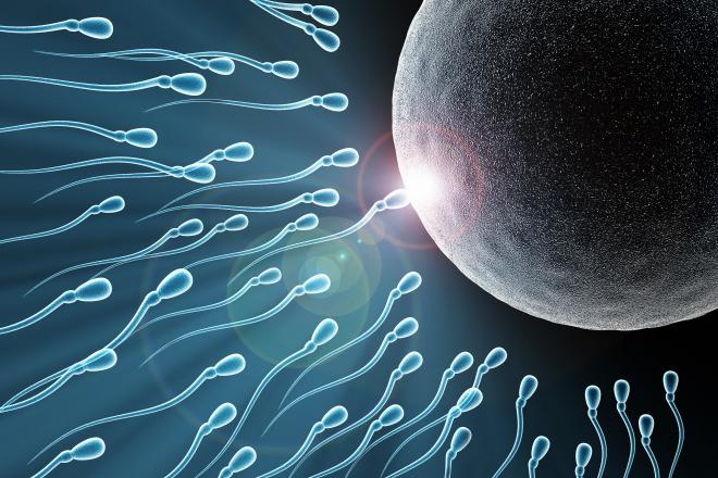 Preconception for Egg and Sperm