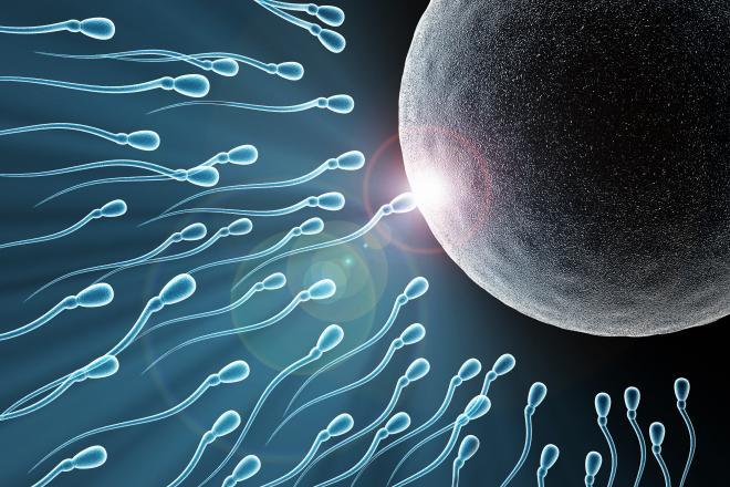Preconception for Egg and Sperm